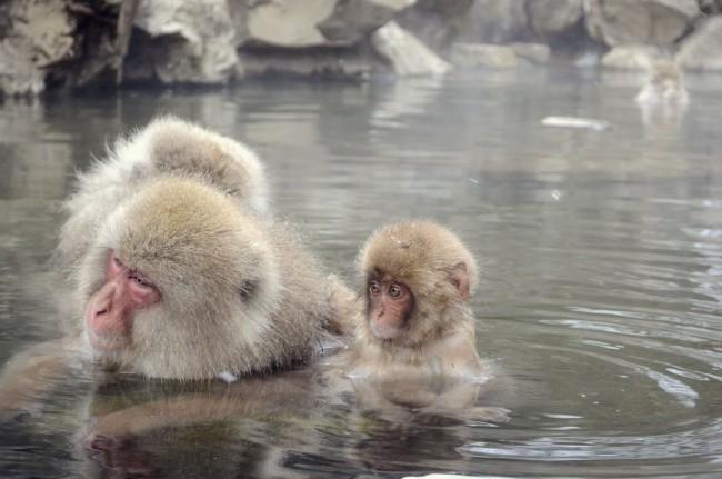 サルの子供がお風呂に入る