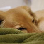 【2歳児】病気の後、泣いて起きる &寝起きが悪い子