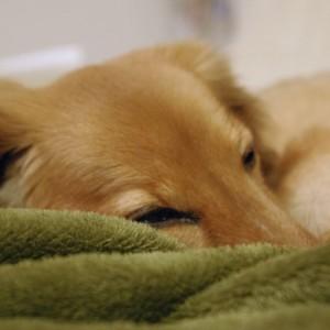 寝起きが悪い2