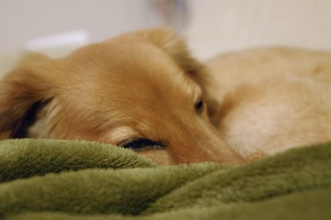 寝起きが悪い