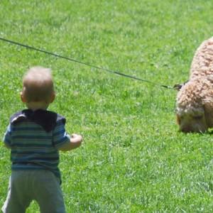 同じ大きさ子供と犬2