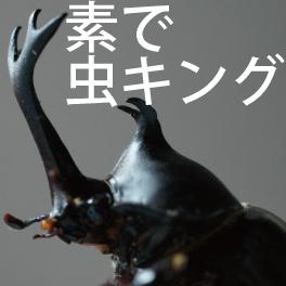 カブトムシの羽化の際の注意