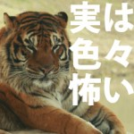 【怖がりな子】 虫・水・動物~怖がって立ち上がろうとしない!